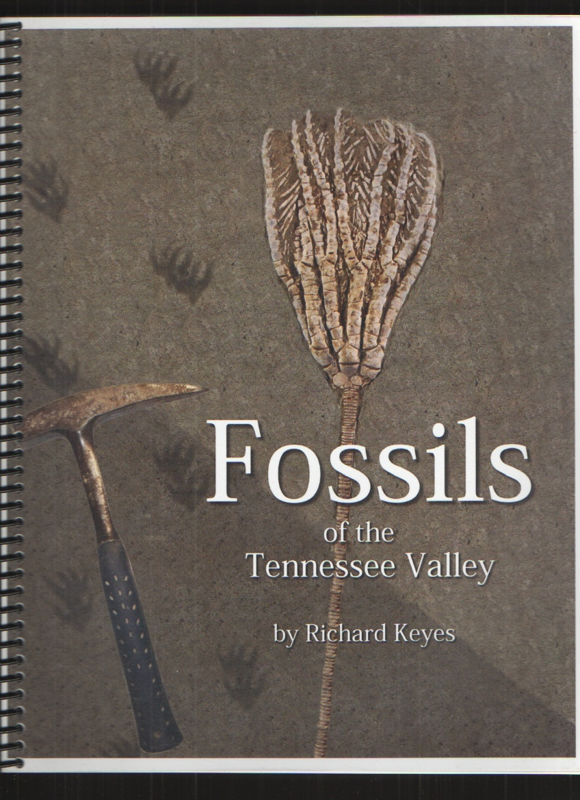 Image for Fossils of the Tennessee Valley